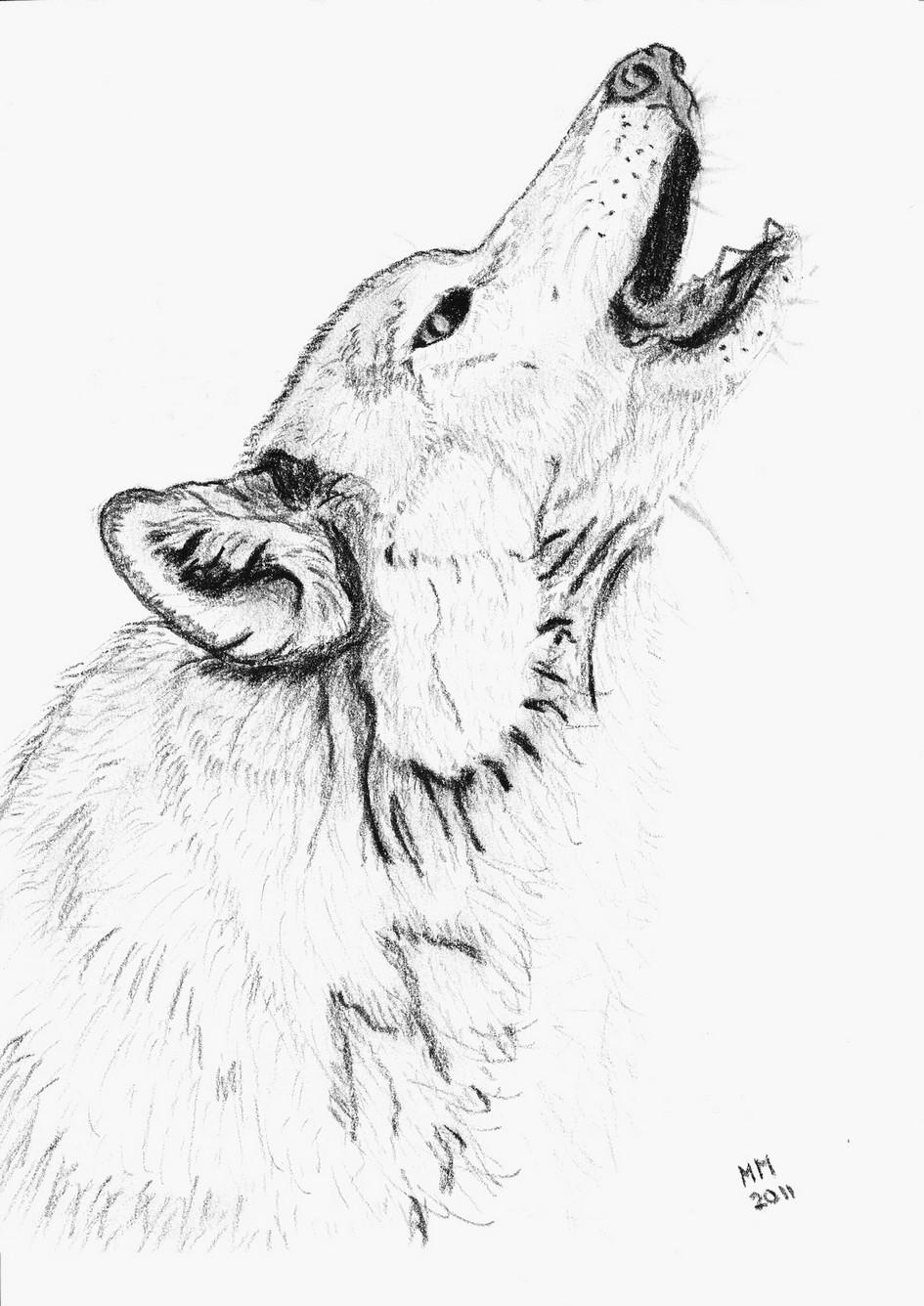 meilleur Coloriage De Loup dessin - Lesgenissesdanslmais